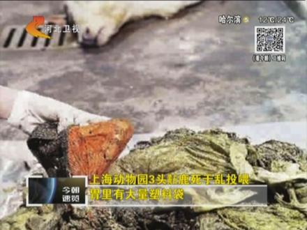 上海动物园3头鹿死亡胃里有大量塑料袋--人民电视
